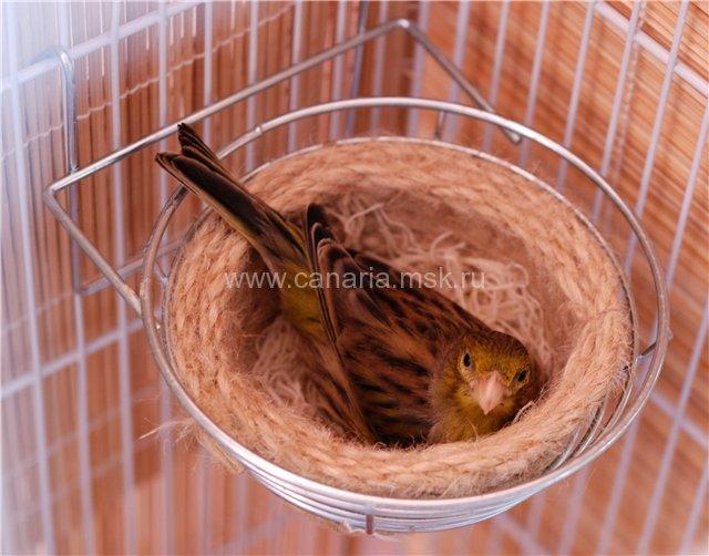 Как сделать гнездо для канарейки