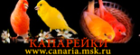 КАНАРЕЙКИ: Породы; Содержание; Кормление; Разведение; Приобретение; Форум вопросов и ответов; Каталог ссылок